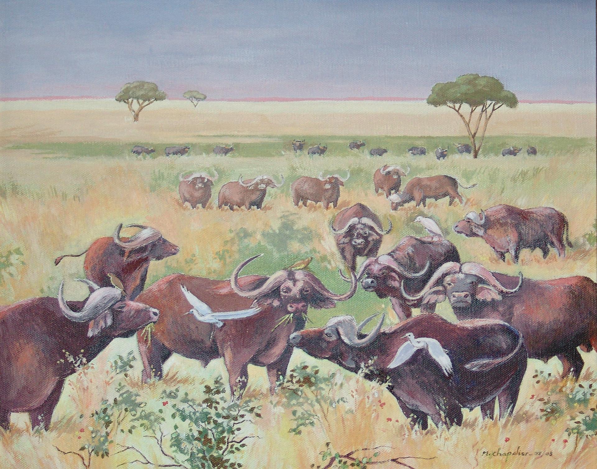 Buffles dans la savane