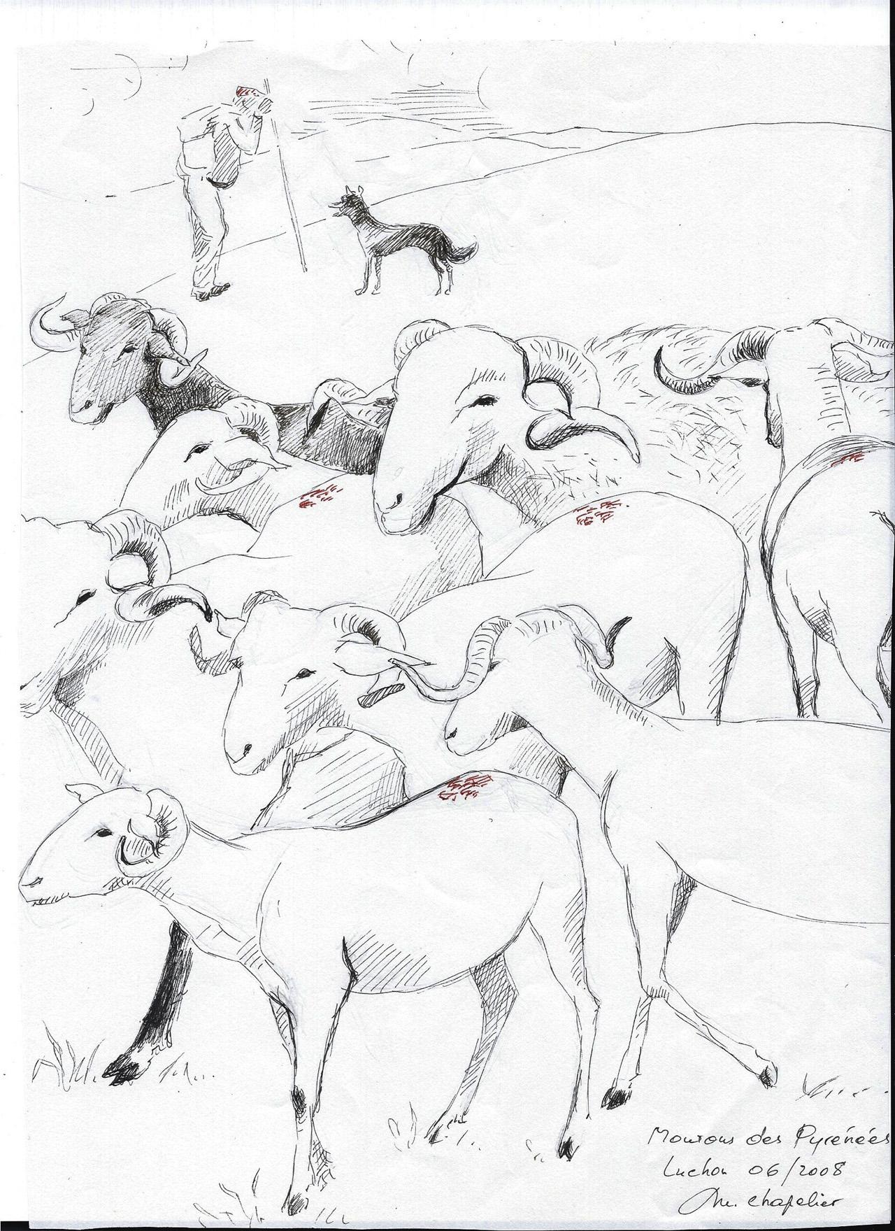 Moutons des Pyrénées